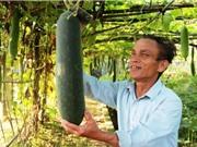 Hà Tĩnh được mùa bí xanh Tre Việt