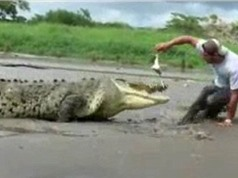 Clip: Suýt mất mạng vì đưa mồi cho cá sấu khổng lồ ăn