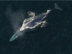 """""""Điểm danh"""" 10 loài cá voi dài nhất hành tinh"""