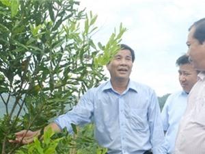 Bày cách cho người dân huyện nghèo trồng cây mắc ca