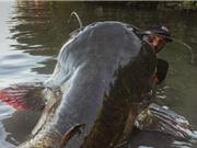 """Clip: Câu cá giải trí ai ngờ tóm được """"quái vật"""" khổng lồ"""