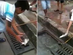 """Clip: Màn bắt cá trong cống """"siêu dị"""" trên đường phố Hà Nội"""