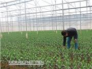 Ứng dụng hoa học và công nghệ để phát triển Tây Nguyên: Quy hoạch vùng sản xuất hàng hoá tập trung quy mô đủ lớn