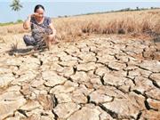 Tìm giải pháp để Đồng bằng sông Cửu Long thích ứng với biến đổi khí hậu