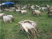 Hà Giang bảo vệ và phát triển giống ong nội địa trên vùng Cao nguyên đá