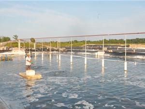 Quảng Ninh sắp có khu sản xuất tôm giống 500 tỷ đồng