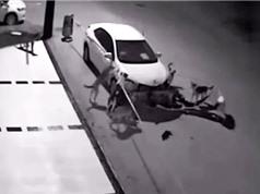 Clip: Truy đuổi mèo, đàn chó phá nát xe hơi