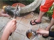 """Clip: """"Ớn lạnh"""" với món tiết canh cá của người Việt"""