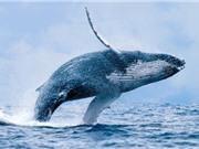 Hóa thạch khiến các nhà khoa học cân nhắc lại thuyết tiến hóa của cá voi