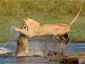 10 cuộc ác đấu kinh hoàng nhất trong thế giới động vật