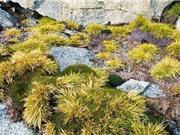 Nam Cực sẽ biến thành rừng rậm trong tương lai?
