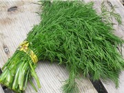 Phương pháp trồng và chăm sóc thì là xanh tốt quanh năm
