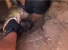 Clip: Dùng tay không bắt cá trê khổng lồ trong cống bỏ hoang