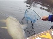 """Clip: Câu được cá chép """"cực khủng"""" trên hồ"""