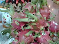 """Bảo hộ chỉ dẫn địa lý """"Bình Thuận"""" cho sản phẩm thanh long"""