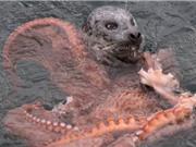 """Clip: Bị bạch tuộc khổng lồ quấn chặt, hải cẩu vẫn thoát chết """"thần kỳ"""""""