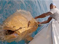 Clip: Câu cá mú khổng lồ ngoài khơi Florida
