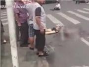 CLIP HOT NHẤT TRONG NGÀY: Xe tải đâm chết người, chó hoang xé xác linh dương