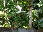 """Clip: Mèo làm """"siêu nhân"""", bay người lên không trung bắt chim"""