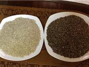 Đắk Lắk trồng lúa thảo dược có nhiều ưu điểm