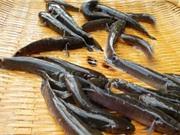 Cá bống bớp - đặc sản vùng Nghĩa Hưng