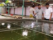 Nuôi cá bống bớp theo quy trình sạch ở Nam Định