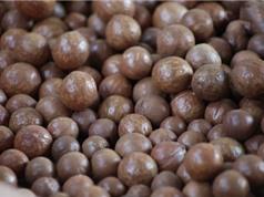 Dây chuyền khép kín cho năng suất 300kg hạt mắc ca mỗi ngày