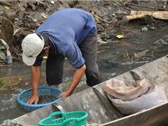 Ốc gạo Tân Phong - đặc sản Tiền Giang