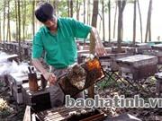 Mật ong Vũ Quang - đặc sản thoát nghèo của Hà Tĩnh