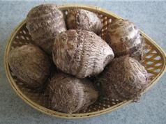 Kỹ thuật trồng và chăm sóc khoai sọ trong thùng xốp