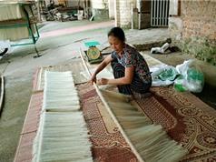 Hình ảnh sản xuất mỳ gạo ở làng nghề Hùng Lô, Phú Thọ