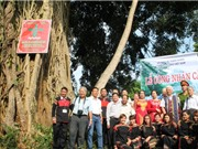 Đắk Lắk: Cây tung ở buôn Ky được công nhận Cây Di sản Việt Nam