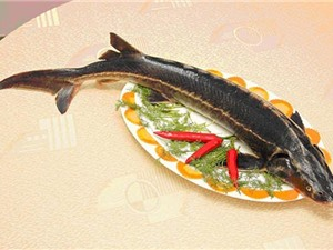 Clip: Cá tầm - thực phẩm tốt cho sức khỏe nam giới