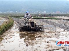 Thiếu giống chất lượng, nguy cơ tăng diện tích ruộng bỏ hoang!