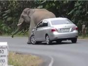 """Clip: Kinh hoàng cảnh voi rừng """"nổi điên"""" đòi đè bẹp ôtô"""