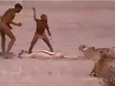 Clip: Thổ dân châu Phi liều mạng cướp mồi của báo săn