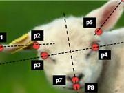 Phát triển phần mềm xác định cơn đau của vật nuôi