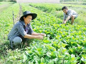 TPHCM: Hỗ trợ 5 tỷ đồng ứng dụng công nghệ trong nông nghiệp