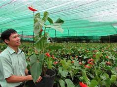 """Lâm Đồng: Thu tiền tỷ sau """"lễ kết hôn"""" giữa hoa hồng môn và địa lan"""
