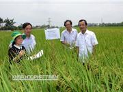 """Giao lưu nông dân - nhà khoa học về phương pháp cấy lúa hiệu ứng hàng biên"""""""