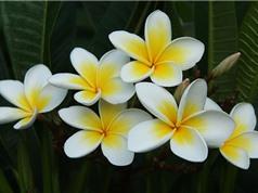 Chiêm ngưỡng vẻ tuyệt mỹ của loài hoa đẹp nhất thế giới