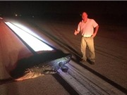 Cá sấu chết thảm vì đòi cắn máy bay