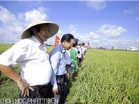 Hình ảnh giao lưu nông dân - nhà khoa học về phương pháp cấy lúa hàng biên