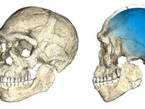 Hóa thạch cổ nhất của người hiện đại từ 350.000 năm trước