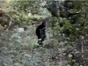 Phát hiện sinh vật giống người tuyết trong rừng ở Mỹ