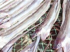 Clip: Ngư dân Phú Yên làm giàu từ đặc sản cá đét