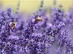 Vẻ đẹp kiêu kì của loài hoa mang ý nghĩa của sự chung thủy