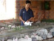 Lâm Đồng: 9X khởi nghiệp từ nghề nuôi thỏ