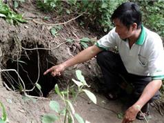 Những huyền thoại rắn khổng lồ ở Việt Nam