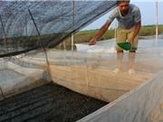Nuôi ếch giống và thương phẩm thu gần 2 tỷ đồng/năm